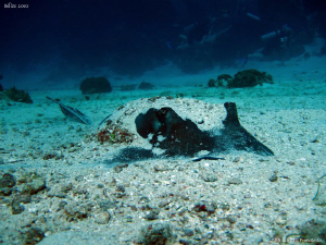 Stingray. Canon Ixus 980. by Bea &amp; Stef Primatesta 